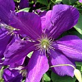 The Purple Sunny Day  by David Drain