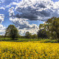 The Quiet Farm by David Pyatt
