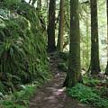 The Quiet Forest by Karen Hussey
