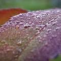 Rain Falls Lightly by Dee Winslow