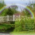 The Rainbow Bridge - Losing A Pet  by Angie Tirado