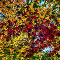 The Rainbow Tree by John Haldane