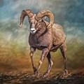 The Ram by Teresa Wilson