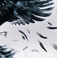 The Raven by Elena Vedernikova
