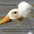 The Real Donald Duck by Gary Canant