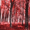The Red Forest by Dan Sproul
