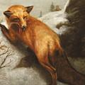 The Red Fox by Abbott Handerson Thayer