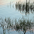 The Reeds by Michael Hills