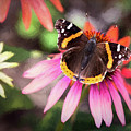 The Regal Red Admiral by Sharon McConnell