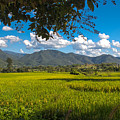 The Rice Fields Of Pai, Thailnad by Nomadic Ninja Negativs