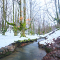 The River In The Otzarreta Forest With Snow by Carlos Aragon