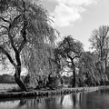 The River Wey,guildford, Surrey,england  by Philip Enticknap