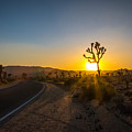 The Road To Joshua Tree At Sunset by DAC Photography