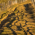 The Road To The Pasture by Lyudmila Prokopenko