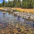 The Rocks Of Rock Creek by Lynn Bauer