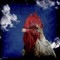 The Rooster by Ernie Echols