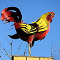 The Rooster . Square . 40d4622 by Wingsdomain Art and Photography