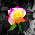 The Rose by Doug Sanchez