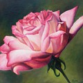 The Rose by Lori Brackett