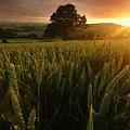 The Rural Sunset by Angel  Tarantella