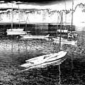 The Sailboats by David Patterson