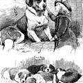 The Saint Bernard Club Dog Show by Charles Burton Barber