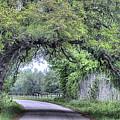 The Sam Houston Oak Arch by JC Findley