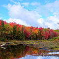 The Scarlet Reds Of Autumn by David Patterson