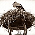 The Schierstein Stork Sepia by Sarah Loft