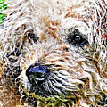The Scruffiest Dog In The World by Meirion Matthias