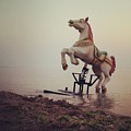 The Sea Horse by Popa Constantin