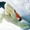 The Seductive Swan by Henry Kim