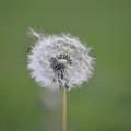 The Seedling by Jimi Bush
