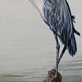 The Sentinel - Portrait Of A Great Blue Heron by Dreyer Wildlife Print Collections