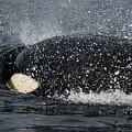 The Shake - Wildlife Art by Jordan Blackstone