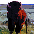 The Shamans Buffalo by David Lee Thompson