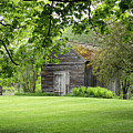 The Shed In The Trees by Rosalie Scanlon