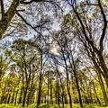 The Silent Forest  by David Pyatt
