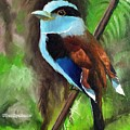 The Silver Breasted Broadbill by Sandhya Manne