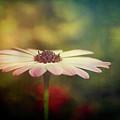 The Simple Beauty  by Saija Lehtonen