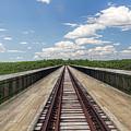 The Skywalk by Jim Lepard