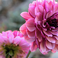 The Sleeping Beauty 2 by Victor K