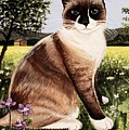 The Snowshoe Cat by Elizabeth Robinette Tyndall
