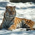 The Snowy Lion by Karl Schroeder