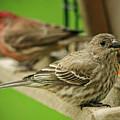 Two Finch's by Susan McMenamin