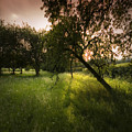 The Spring Orchard by Angel Ciesniarska