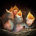 The Spring Quartet by Karen Wiles