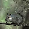 The Squirrel by Angel Ciesniarska