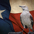 The State Bird Of Texas by David and Carol Kelly