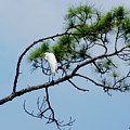 The Stoic Egret - Debbie May by Debbie May